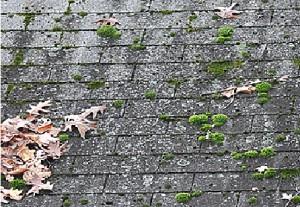 Moss Damage