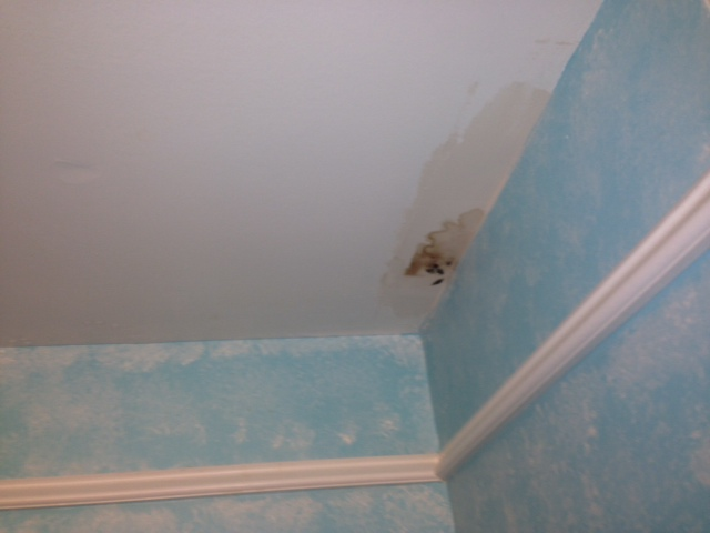 Mold bathroom ceiling