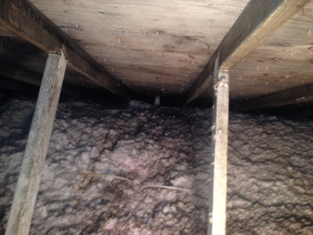 Mold in attic